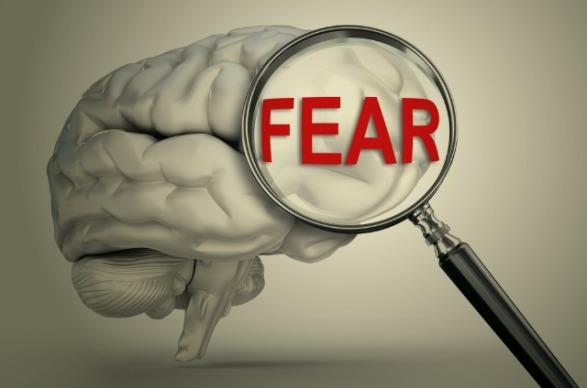 is-amygdala-really-brains-fear-center