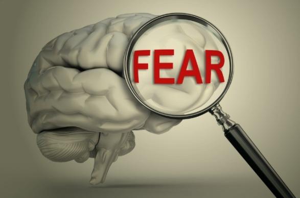 is-amygdala-really-brains-fear-center